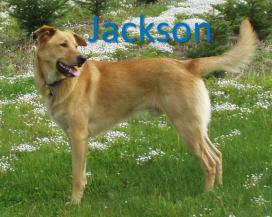 Jackson Stack Name
