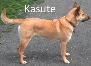 kasute stack name
